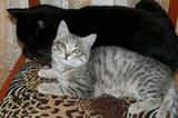 Котик из Рекламы Вискас